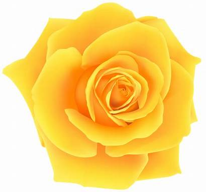 Rose Yellow Clipart Clip Flowers Roses Flower