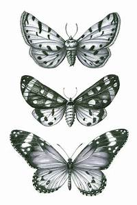 3 Butterflies By Lagrisette On Etsy   10 00