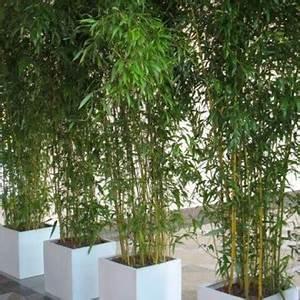 Wie Schnell Wächst Bambus : bambus auf dachterasse wenn ja wie garten ~ Frokenaadalensverden.com Haus und Dekorationen