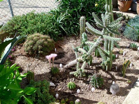 plantes grasses d exterieur architecture design