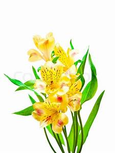 Spring flowers isolated on white background | Stock Photo ...