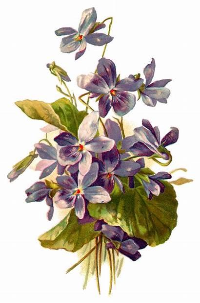 Illustration Forget Flower Clipart Botanical Flowers Violet