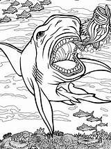 Quiver Coloring Shark App Sharks Tiger Printable Getdrawings Dwellers Ocean Animals Colouring Getcolorings Dover Lineart Colorings sketch template