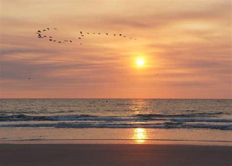 fernandina beach fl pictures posters news     pursuit hobbies interests