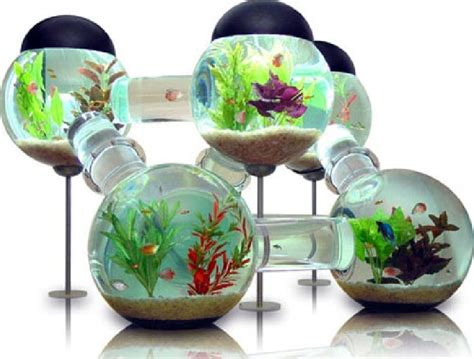 modern cool fish aquarium design image  pictures