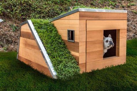 designer dog house puts   dog houses  shame curbed