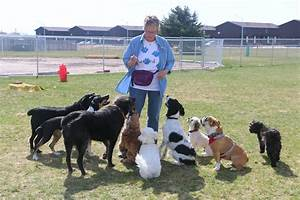 Sitterz offers dog daycare socialization and training for Red dog daycare