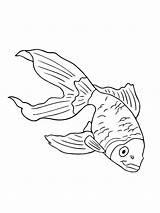 Aquarium Ausmalbilder Fische Malvorlagen Ausdrucken Kostenlos Zum Fish sketch template