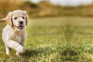 Bodenbelag Für Hunde Geeignet : welche hunde sind f r anf nger geeignet tierischehelden ~ Lizthompson.info Haus und Dekorationen