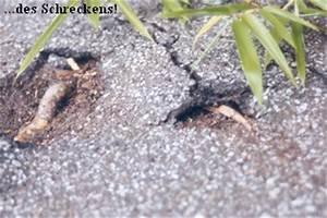 Rhizomsperre Selber Bauen : bitumen wellpappe als rhizomsperre seite 2 ~ A.2002-acura-tl-radio.info Haus und Dekorationen