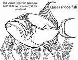 Fish Coloring Pages Saltwater Puffer Drawing Recycling Freshwater Pufferfish Tropical Drawn Angelfish Fresh Getcolorings Printable Getdrawings sketch template