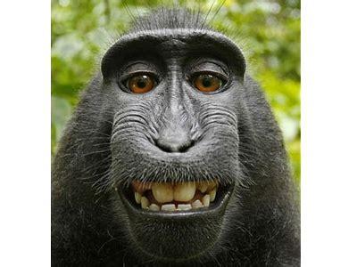 aap maakt digitale fotoserie van zichzelf computer idee