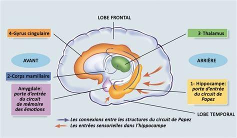 ricardo cuisine francais encyclopédie larousse en ligne hippoce et amygdale