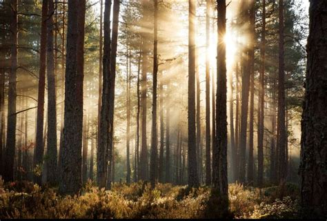 photo wallpaper forest sunrise walldesign wall decals