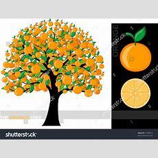 Illustration Cartoon Orange Tree Isolated On Stock Vector 81408019 Shutterstock