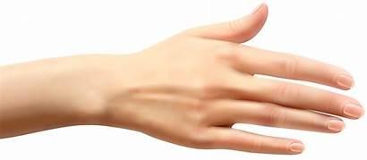 Hand Hands Clipart Female Clip Transparent Arm