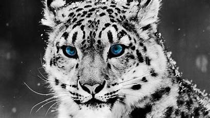Gambar Ukuran Besar Keren Wallpapers Snow Animal