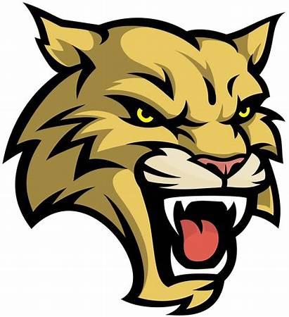 Wildcat Vector Clipart Mascot Logos Gato Cat