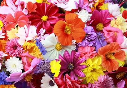 Colorful Flowers Wallpapers Nature 4k Backgrounds 2041
