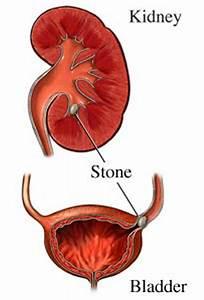 Smorgasbord Health 2017  U2013 Top To Toe  U2013 The Kidneys