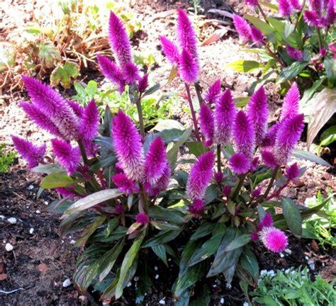Topfpflanzen Für Den Garten by Garten Versch 246 Nern Sommerblumen Garten Pflanzen