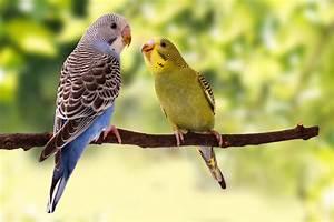 Alles über Wellensittiche : wellensittiche die kleinen papageien in ihrem zuhause ~ Yasmunasinghe.com Haus und Dekorationen