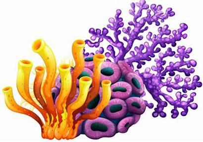 Coral Reef Clip Purple Sea Yellow Under