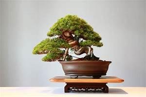 Bonsai Baum Arten : den bonsai baum richtig und praktisch pflegen tipps ~ Michelbontemps.com Haus und Dekorationen