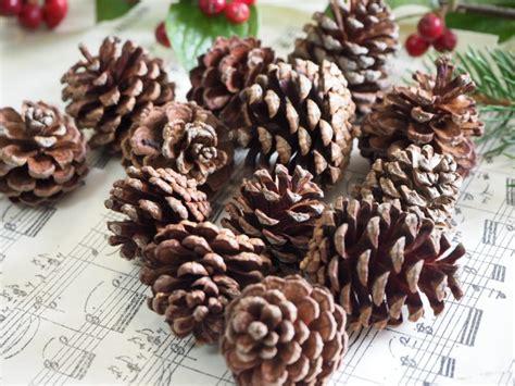 50 Mini Tannenzapfen Zapfen Deko Tischdeko Weihnachten