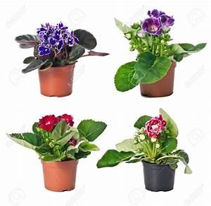 Pot Fleur Interieur : fleurs en pot interieur fleuriste bulldo ~ Teatrodelosmanantiales.com Idées de Décoration
