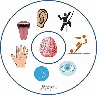 Sensori Integrasi Sensory Dasar Auditory Sistem Youngesteight