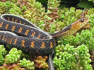 Life Is Short  But Snakes Are Long  Tetrodotoxin