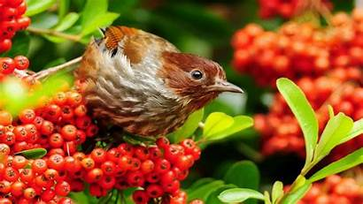 Birds Wallpapers Nature Animal Desktop Apps Android
