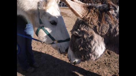 horse companions donkeys