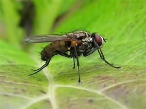 Comment Chasser Les Mouches : des m thodes naturelles pour chasser les mouches ~ Melissatoandfro.com Idées de Décoration