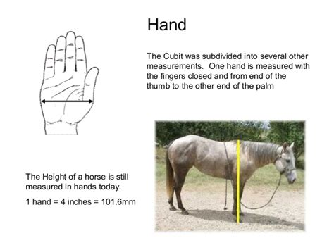 history measurements horse hand measured