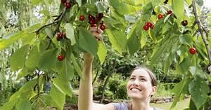 Maden In Kirschen : kirschfruchtfliege s kirschen ohne maden mein sch ner ~ Lizthompson.info Haus und Dekorationen