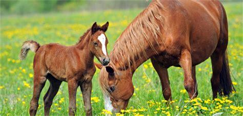 pferd steckbrief gardigo kids