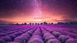 Starry, Sky, Lavender, Field, Wallpapers
