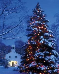 25, festive, christmas, tree