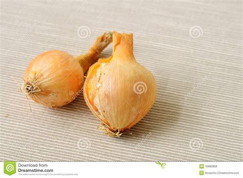 is garlic a vegetable garlic vegetable royalty free stock photos image 16685858