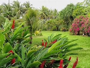 Mediterrane Pflanzen Winterhart : mediterrane und tropische pflanzen f r den garten garten welt wissen ~ Frokenaadalensverden.com Haus und Dekorationen