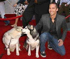 Paul Walker - Farewell To Animal Lover and Actor