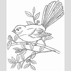 Tui Coloring, Download Tui Coloring