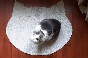 Tapis Pour Chat : diy le tapis pour chachat morning by foley ~ Teatrodelosmanantiales.com Idées de Décoration