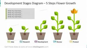Business Growth Development Stages Flower Growth Ppt