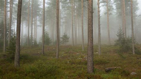 filefog   forest telemark jpg wikimedia commons