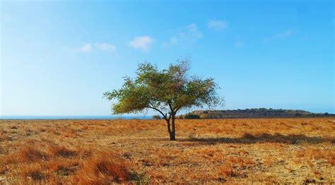 savana puru kambera primadona wisata  tanah sumba