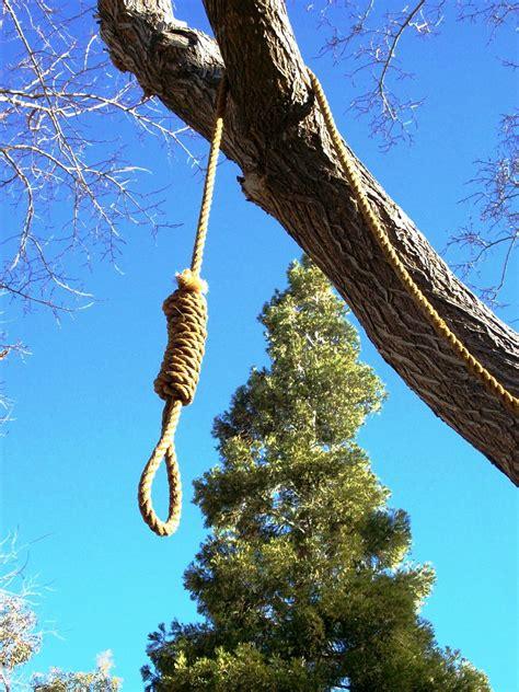 rope hangmans noose hanging   tree
