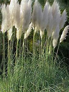 Gräser Zurückschneiden Frühjahr : gr ser bambuspflanzen hagebaumarkt arens hilgert ~ Lizthompson.info Haus und Dekorationen